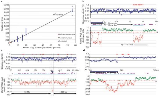 Detecção de duplicação segmentar em chimpanzé na montagem do genoma humano NCBI. Em A, mostra uma correlação do número de cópias e sequência em todo o genoma (R2=0,953) com base na análise de original e de loci de chimpanzé duplicado e o número de cópias conhecidas. De B até D, três exemplos de semelhanças de duplicações em chimpanzés que são retratadas com base em 4 analises de duplicações (WGAC humano, azul escuro; WSSD humano, preto; WGAC de chimpanzé, em roxo; e WSSD chimpanzé, em azul claro). Desvios significativos em chimpanzés são mostrados em vermelho. Pontos vermelhos indicam a posição de variantes.