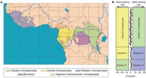 """Em A) Distribuição geográfica dos bonobos e chimpanzés. B) estatísticas para o teste de mistura entre bonobos e três grupos de chimpanzés. Cada comparação pareada entre um bonobo e dois grupos de chimpanzés é retratado no painel. Cada ponto em um painel representa um indivíduo bonobo em comparação com dois indivíduos de diferentes grupos de chimpanzés. A mistura entre bonobo e chimpanzé é indicado por um """"Z-score"""" superior a 4,4 ou menor - 4,4."""