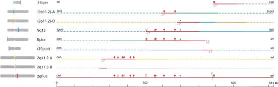 Resumo das regiões de homologia com porções da sequência de 614 kb em torno do local de fusão em 2q13-2q14.1 que foram identificados. Linhas sólidas vermelhas indicam as regiões com >95% de identidade com a sequência média 2qFus. As cores diferentes são usados para indicar sequências divergentes, com linhas cheias indicam a extensão da sequência, as outras linhas pontilhadas indicam qualquer sequência indisponível que não tem homologia com qualquer outros segmentos mostrados. Blocos 9p11.2-A e -B no mapa mostram uma região peri-centromérica de 9 por hibridação fluorescente in situ e estão atribuídos a 9p11.2.