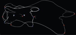 Modelo computacional representa a terceira mudança vértebra cervical entre Samotherium (azul) e girafa moderno (vermelho). (a) Alinhados C3 de Samotherium e G. camelopardalis mostrar colocação marcador correspondente ao ponto da faceta articular craniano crânio-caudal, mais a maioria de ponto da faceta articular caudal, craniano mais pontos da protuberância craniana, aberturas cranial e caudal do transversarium forame, ponto do corpo vertebral caudal, ponto do corpo vertebral caudal ventral-mais, e cranial ponta mais do tubérculo dorsal ventral mais-.