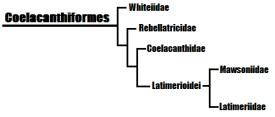 Resumo das relações filogenéticas entre os C