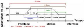 Gráfico do ciclo celular