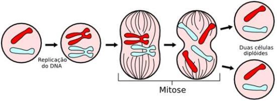 Resumo da Mitose