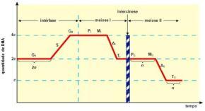 Gráfico do ciclo celular na mitose. Clique para ampliar