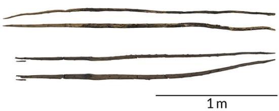 Novas descobertas de fósseis indicam que os hominídeos que vivem na Europa cerca de 300.000 anos atrás rechaçou gatos dente de sabre com lanças de madeira, como estes dois. Cada lança é mostrado a partir de dois ângulos. W.H. Schoch et al / Journal of Human Evolution 2015, CS Fuchs (foto)