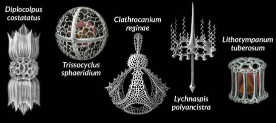Desenhos notáveis de ESTRUTURAL BELEZA Ernst Haeckel de organismos microscópicos (Radiolarians mostrados) introduziu gerações a beleza do complexo, a vida unicelular. Mesmo no século 19, ele protestou negligência das maravilhas microbianas dos biólogos.