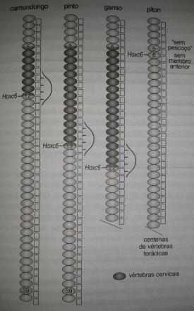 homologia