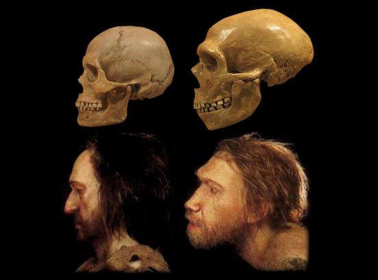 Neanderthais tem a arcada supraciliar robusta, testa baixa inclinada para trás e ampla cavidade nasal. Outra característica fundamental de neaderthais é que possuem um queixo recuado, além das maças do rosto também retraídas. Há um prognatismo médio-facial projetando a face para frente (puxado pela palato). Seus dentes são maiores que o da espécie humana, mandíbula grande proporcional á musculatura facial e do corpo. Os dentes incisivos são abaulados e há um espaço retromolar entre o terceiro molar e o ramo ascendente da mandílbua em consequência do prognatismo.