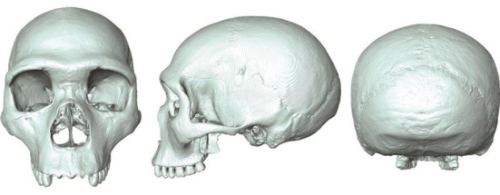 """O """"fóssil virtual 'do último ancestral comum de humanos e neandertais. Crédito: Aurélien Mounier"""