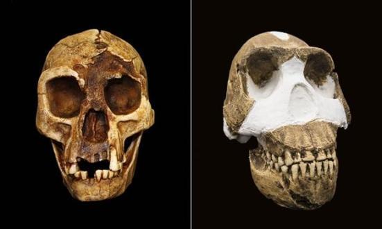 'O Hobbit', ou Homo floresiensis, à esquerda, e Homo Naledi, certo. Composto: Alamy, Rex