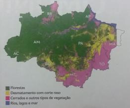Mais de 20% da floresta está desmatada
