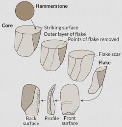 Do canto superior esquerdo para inferior esquerdo, desenhos descrevem o processo de utilização de um martelo de martelar para um nódulo de pedra, com uma superfície preparada, chamado um núcleo, para libertar um floco afiada que pode ser usado como uma ferramenta. Crédito: Usado com permissão por J. Shea / Direitos de autor reservados, adaptado por E. Otwell
