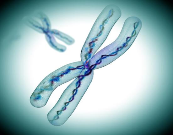 Visão microscópica cromossomo X (imagem) de. Os pesquisadores analisaram maior compêndio mundial de dados sobre a atividade do gene e olhou como a atividade no cromossomo X compara com o de outros cromossomos. Crédito: © Giovanni Cancemi / Fotolia