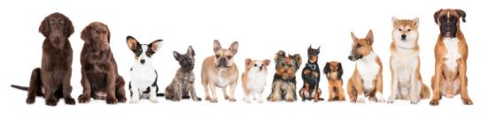 Várias raças de cães. Crédito: © OTS-photo / Fotolia