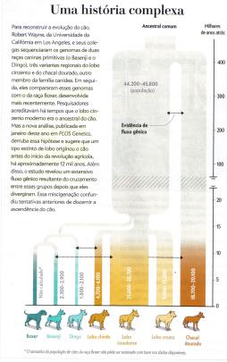 Fonte: Morell, V. Do Lobo ao Cão. Scientific American. Ano 13. N°159, Agosto 2015