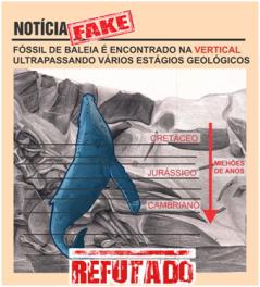 Imagem completamente falsa - A baleia não foi encontrada em 90 graus de inclinação. O esquema omite a disposição das camadas estratigráficas que estavam paralelas ao corpo do animal, mostrando que houve inclinação do substrato onde a baleia estava em repouso (como uma Cornwall fold). O esquema mostra que a cauda do animal esta presente no Cambriano (560 milhões de anos), mas as primeiras baleias só surgiram a partir do Pakicetus datados em 55.8 milhões de anos (final do Paleoceno), as primeiras baleias que deram origem aos grupos atuais só surgiram a partir dos últimos 34 milhões de anos (final do Eoceno). Portanto a imagem força a ideia de um fóssil de mamífero presente em um período geológico que não corresponde a ele. Outro ponto é que quando um animal morre a cabeça tende a ficar para baixo uma vez que é o lado mais pesado do corpo, de tal forma que a disposição vertical com a cabeça para cima é evidência clara de deslocamento do substrato.