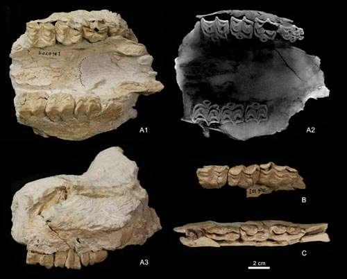 maxilares menores e dentes decíduos de Hipparion tchikoicum de Baogeda Ula
