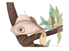 Vichai Malikul, Smithsonian A reconstrução do lacewing Kalligrammatid (Oregramma illecebrosus) consumir pólen cai em uma planta bannettitalean (williamsonia), uma planta antiga que viveu ao lado do lacewing.