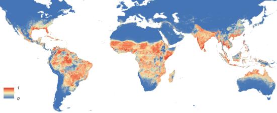 Mapa global da distribuição prevista de Aedes aegypti em 2015. O mapa mostra a probabilidade de ocorrência (de 0 azul para um vermelho) com uma resolução espacial de 5 km × 5 km.