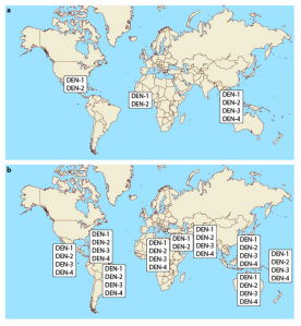 A alteração na distribuição dos sorotipos de dengue. A distribuição dos sorotipos de dengue, em 1970 (a) e 2004 (b). © 2014 Nature Education.