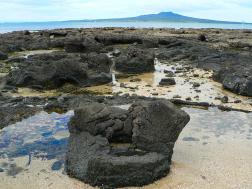 Takapuna Reef floresta fóssil excepcional foi exumado pela erosão costeira, quando o nível do mar subiu à sua altura atual após o último período glacial.