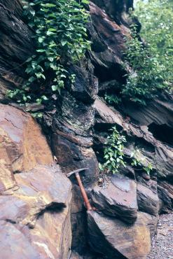 Sigillaria retos de imersão camas de Formação Pennsylvanian Llewellyn em Bear Valley Faixa Mine, do Condado de Northumberland, Pennsylvania