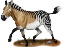 Reconstrução de Equus simplicidens