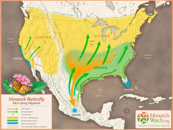Rota de migração da Monarca a Oeste e a Leste. Fonte: Vox
