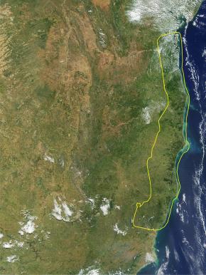 Imagem de satélite em que se observa o Corredor Central (linha amarela), compreendendo os remanescentes de floresta do sul da Bahia e do Espírito Santo.