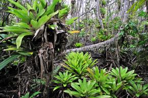 Floresta baixa de restinga