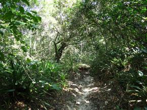 Floresta alta de Restinga. Clique para ampliar