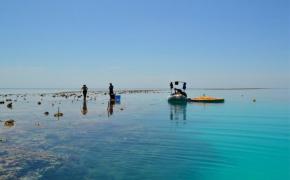 equipe de pesquisa de Albright trabalhando para bombear água do mar experimental sobre o local de estudo plana recife. Crédito: Ken Caldeira