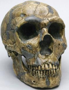 Shanidar nas Montanhas Zagros (Curdistão iraquiano) contou com nove esqueletos encontrados que do Paleolítico Médio.