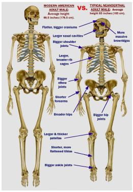 Anatomia comparada de um Humano com Neandertal. Clique para ampliar
