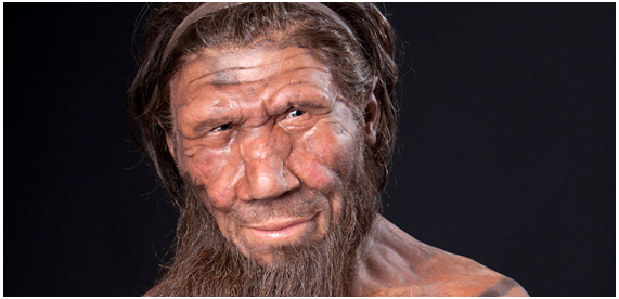 Homo neanderthalensis. Fonte: Natural History Museum