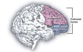 Córtex pré-frontal e dorso-lateral