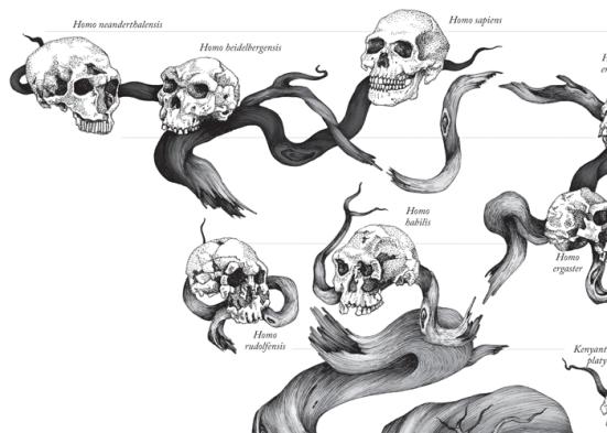 Ramo da filogenia humana onde os humanos e Neandertais se juntam. Esta filogenia provavelmente sera superada pelas novas evidencias vinda dos Denisovanos e a presença do homo antecessor. Imagem: Scientific American