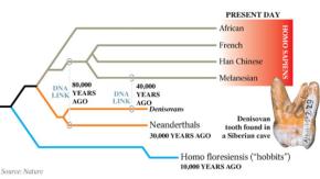 Modelo que demonstra a contribuição de DNA dos Neandertais as populações humanas européias a 80 mil anos e a contribuição de DNA dos Denisovanos a 40 mil anos para os melanésios