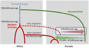 Este cenário mostra como depois de ancestrais humanos dividir com os ancestrais dos neandertais, os dois grupos se cruzaram, pelo menos, duas vezes por 100.000 anos atrás, logo depois que os humanos modernos surgiram e primeira à esquerda África, e novamente entre 47.000 e 65.000 anos atrás. Fonte: Science Magazine