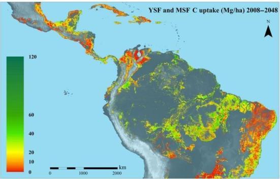 florestas tropicais secundárias consomem quantidades substanciais de carbono, mas são negligenciadas nas mudanças climáticas Muitas vezes a política. Crédito: Robin Chazdon et al
