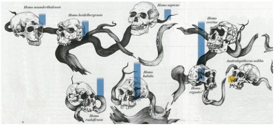Hominídeos do gênero Homo caracterizados por fabricarem ferramentas líticas.