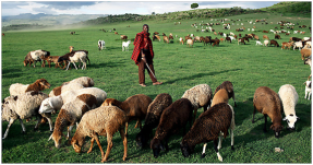 Genes que permitem a tolerância à lactose, o que provavelmente resultou em mais descendentes sobrevivente, foram detectados em culturas como este queniano pastor da. Crédito Per-Anders Pettersson / Getty Images.