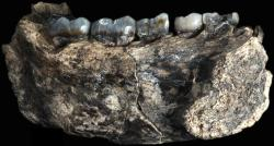 Mandíbula de Ledi-Geraru. Credit William H. Kimbel/Arizona State University. Clique para ampliar