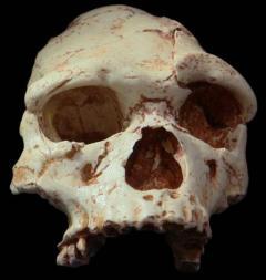 Homo erectus encontrados na caverna Arago em Tautavel (França)