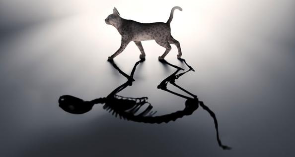 INDÍCIOS CAT - cat mítica de Schrödinger está vivo e morto ao mesmo tempo. Os cientistas discutiram microondas em estados quânticos semelhante bizarros, e agora eles estão tendo a experiência um pouco mais longe, dividindo estado um felino em duas caixas
