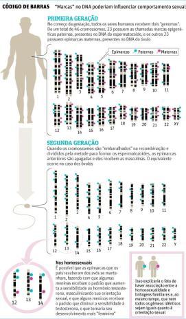 Epigenética e homossexualidade. Clique para ampliar. Fonte: CedsRio