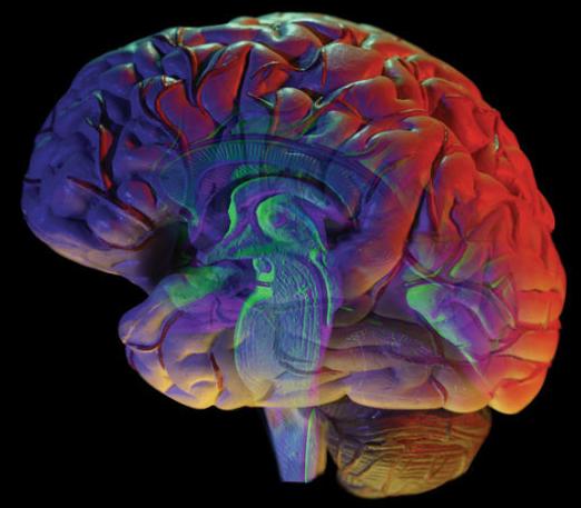 Cérebro humano (imagem). Um novo estudo constatou que a habenula, uma região do tamanho de ervilhas do cérebro, as funções de forma anormal em depressão. A mesma equipe já mostrou que a habenula foi ativado em voluntários saudáveis quando esperavam para receber um choque elétrico. Crédito: © James Steidl / Fotolia