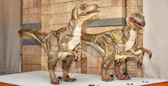 Deinonychus viveu cerca de 144 milhões de anos e é um antepassado dos pássaros modernos.
