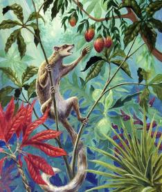 Carpolestes é um gênero de mamíferos similares aos primatas do Paleoceno datado em mais de 58 milhões de anose que co-evoluia junto a angiospermas