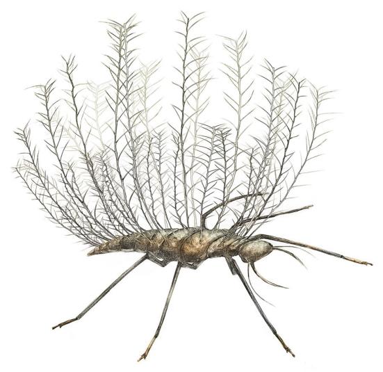 As larvas bizarro, espetado do Chrysopoid (lacewing) é adaptado para o transporte de detritos em sua parte traseira. Pesquisadores reconstruíram esta imagem a partir de um fóssil do Cretáceo que foi preservado em âmbar birmanês. Crédito: Wang et al. Sci. Adv. 2016; 2: e1501918